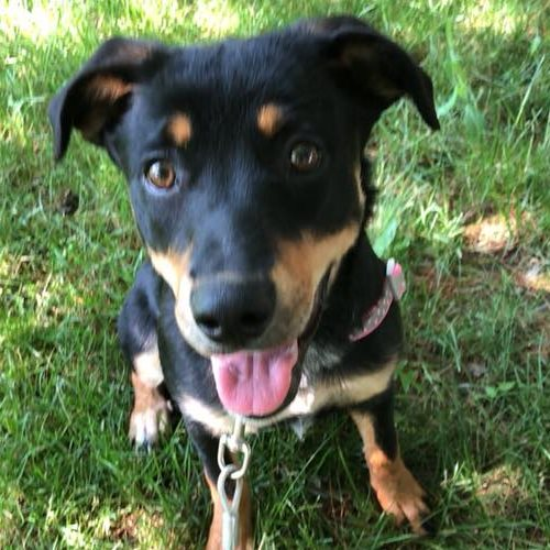 Abbie – 7 Month Old – Female
