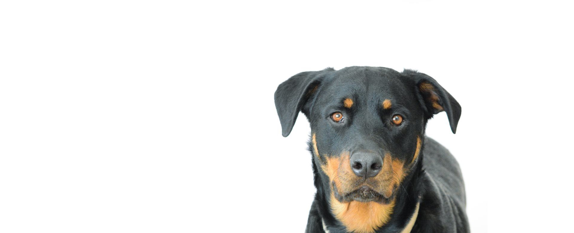 Mid America Rottweiler Rescue