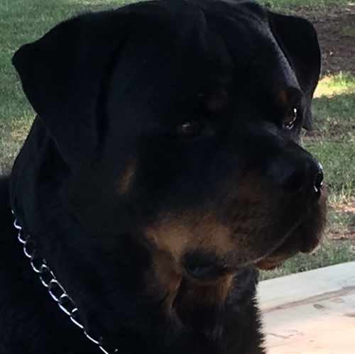 G-Zo – 4 Year Old – Male