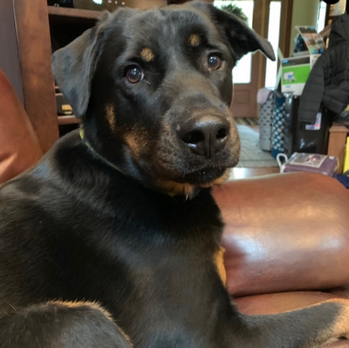 Rocky – 2 Year Old – Male