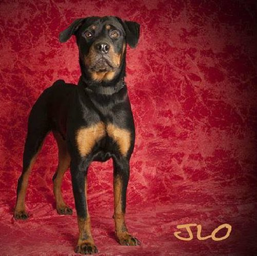 Rocko – 2 Year Old – Male