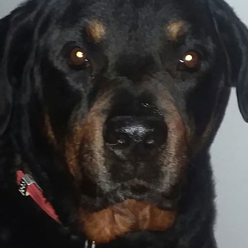Harley – 7 Year Old – Male