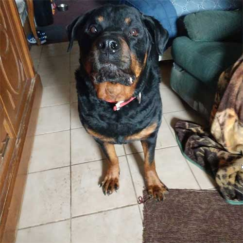Harley – 8 Year Old – Male