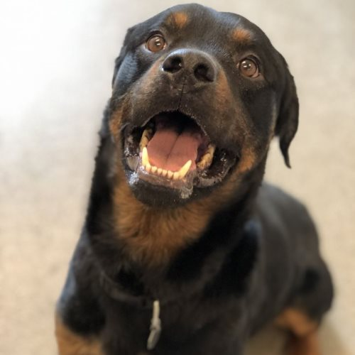 Tank – 4 Year Old – Male