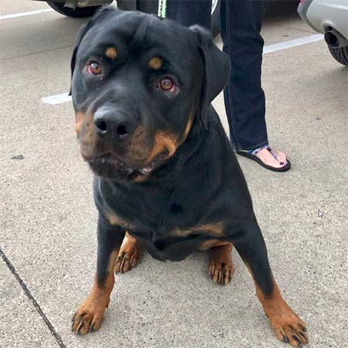 Otto – 6 Year Old – Male