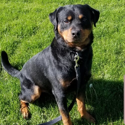 Aries – 4 Year Old – Male