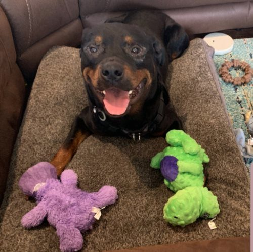 Titus/Rocky Balboa – 2 Year Old – Male