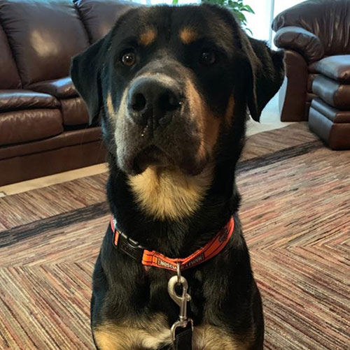 Frankie – 2 Year Old – Male (Available 9/2/19)