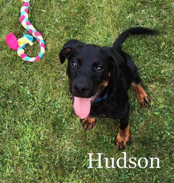 Hudson – 5 Month Old – Male