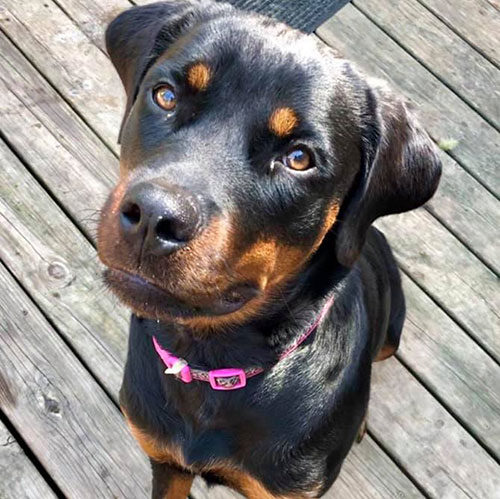 Ohana – 10 Month Old – Female