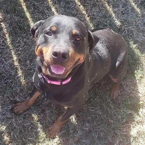 Roxy2 – 7 Year Old – Female
