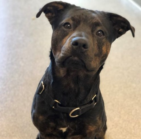Snoop – 2 Year Old – Male