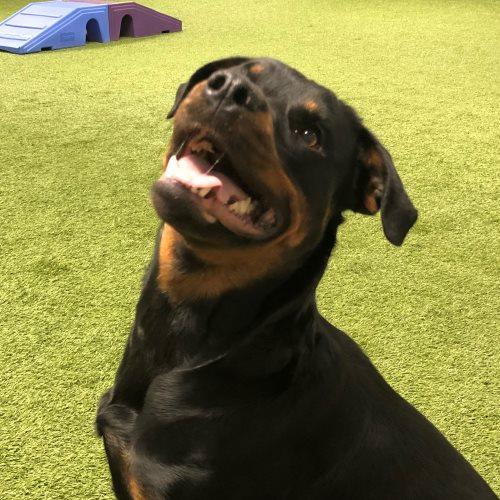 Cleo – Approx 11 Month – Female