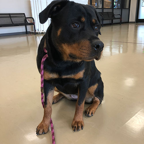 Roo – 1 Year Old – Female