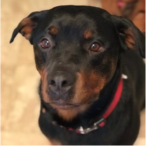 Bane – 3 Year Old – Male