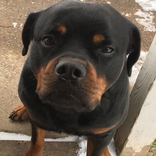Masford – 4 Year Old – Male