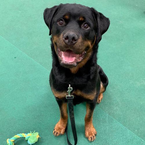 Bane 2 – 11 Month Old – Male