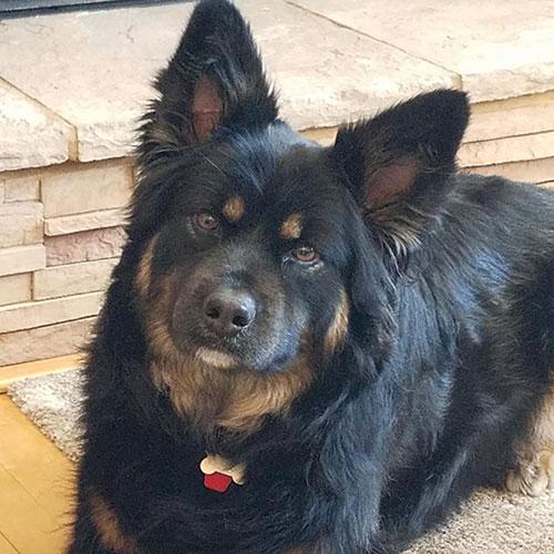 Stella – 5 Year Old – Female