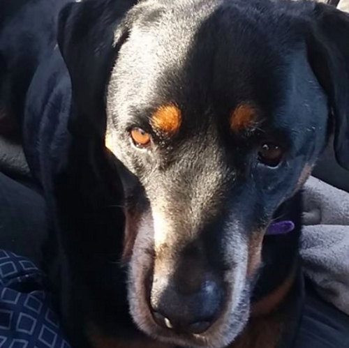 Maggie – 8 Year Old – Female