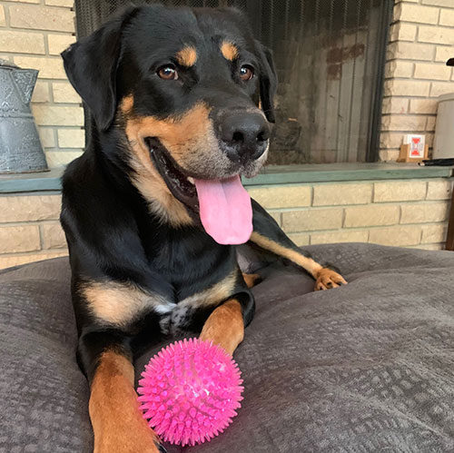 Frankie – 2 Year Old – Male