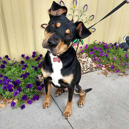 Rocket – 2 Years Old – Male