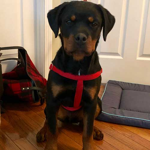 Roxy – 1 1/2 Year Old – Female
