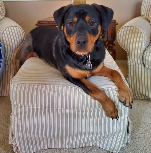 Kimber – 1 Year Old – Female